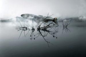 nezpracovane energie znameni Ryb