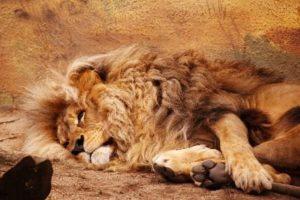 Lev- odpocinek