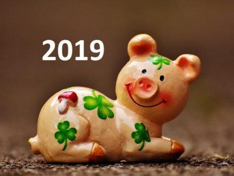 2019 rok zemniho vepre