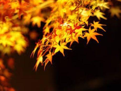 uplnek a novoluni v rijnu