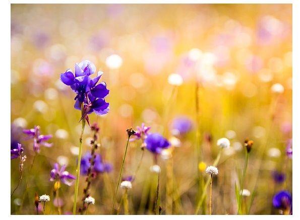 kvetny uplnek, kvety, laska, prozitky, umocneni emoci