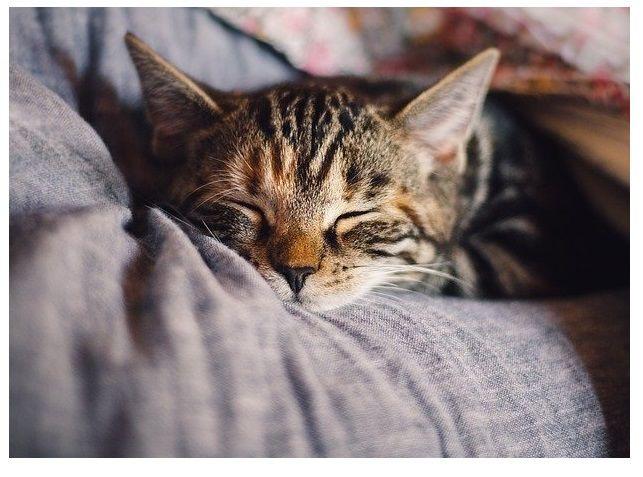 odpocinek, relaxace, klid, oddech