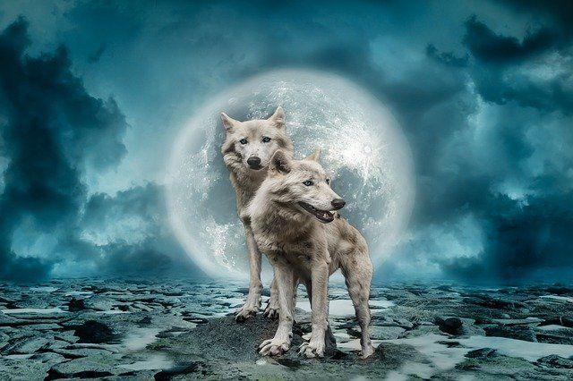 Vlci uplnek